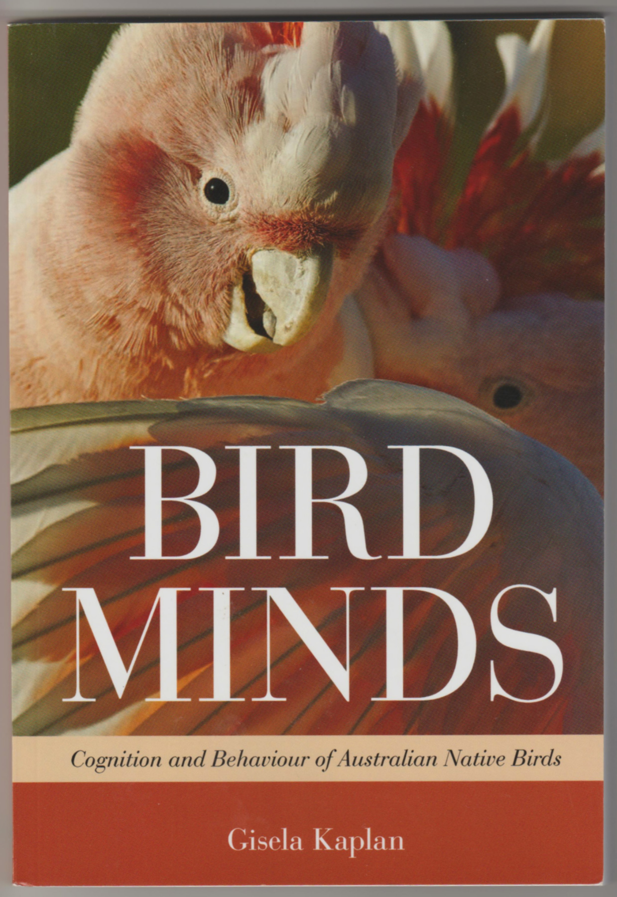 Image for BIRD MINDS: Cognition and Behaviour of Australian Native Birds