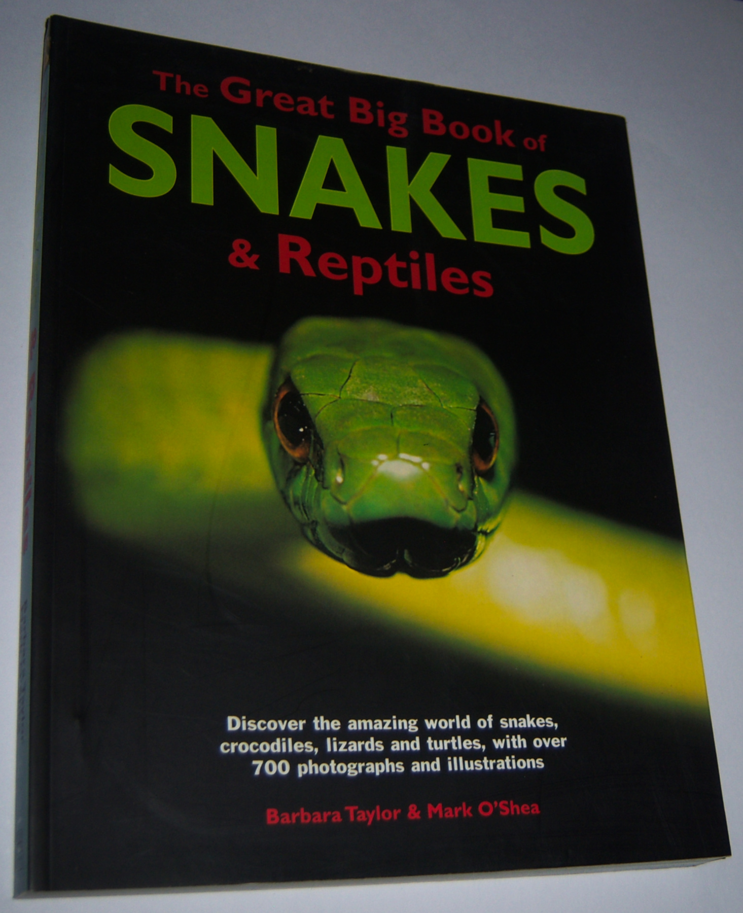 Image for THE GREAT BIG BOOK OF SNAKES AND REPTILES